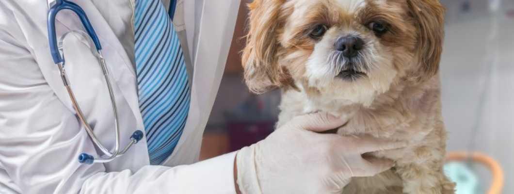 Trovet veterinarske dijete